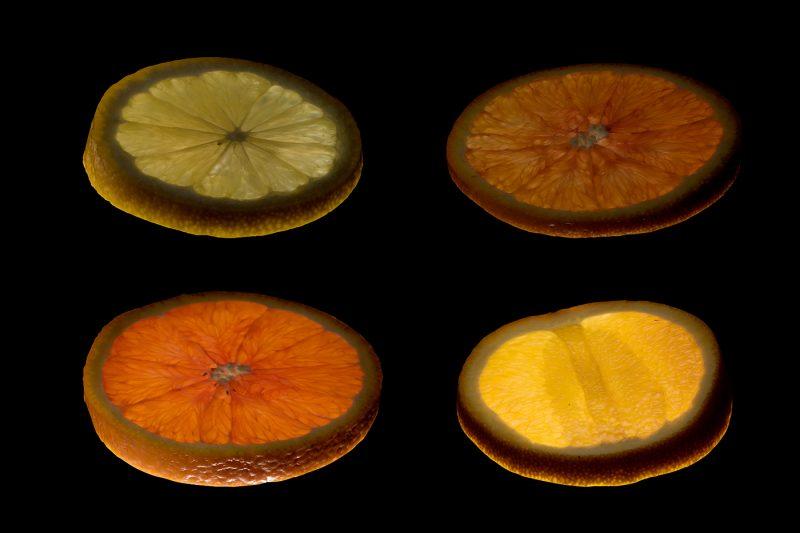 citrus fruit quartet