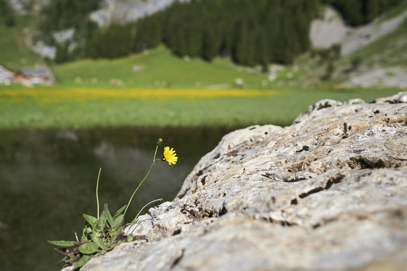 Seealpsee Switzerland Schweiz
