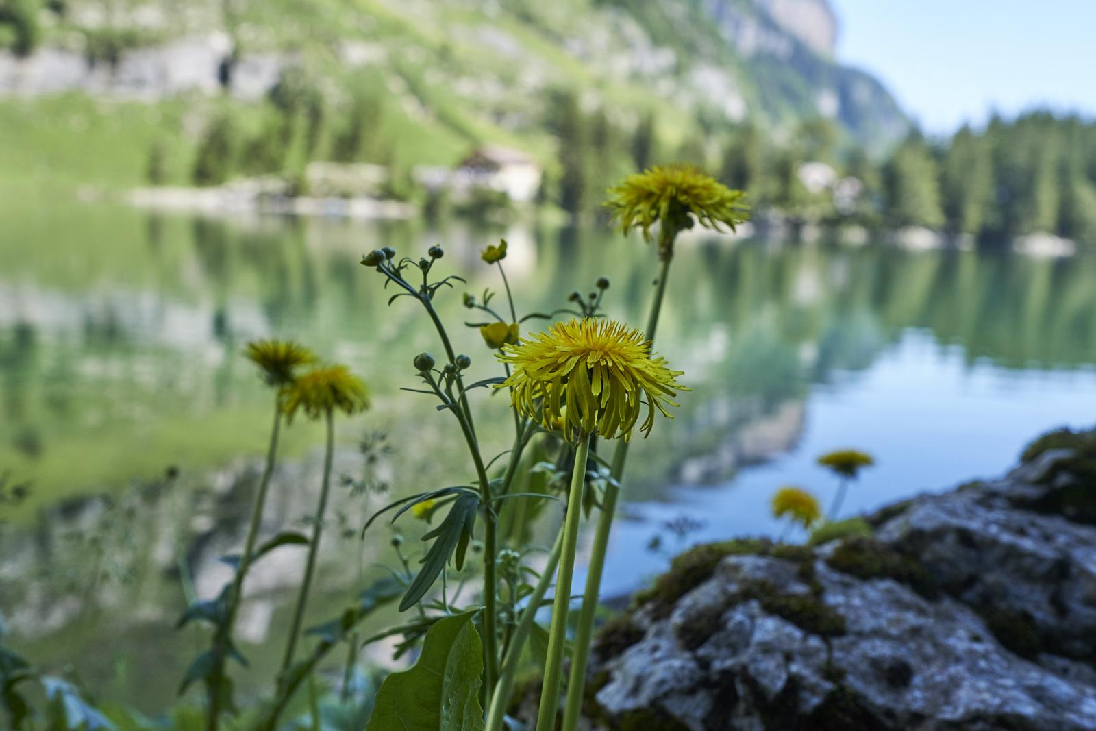 Appenzell Seealpsee Switzerland Schweiz