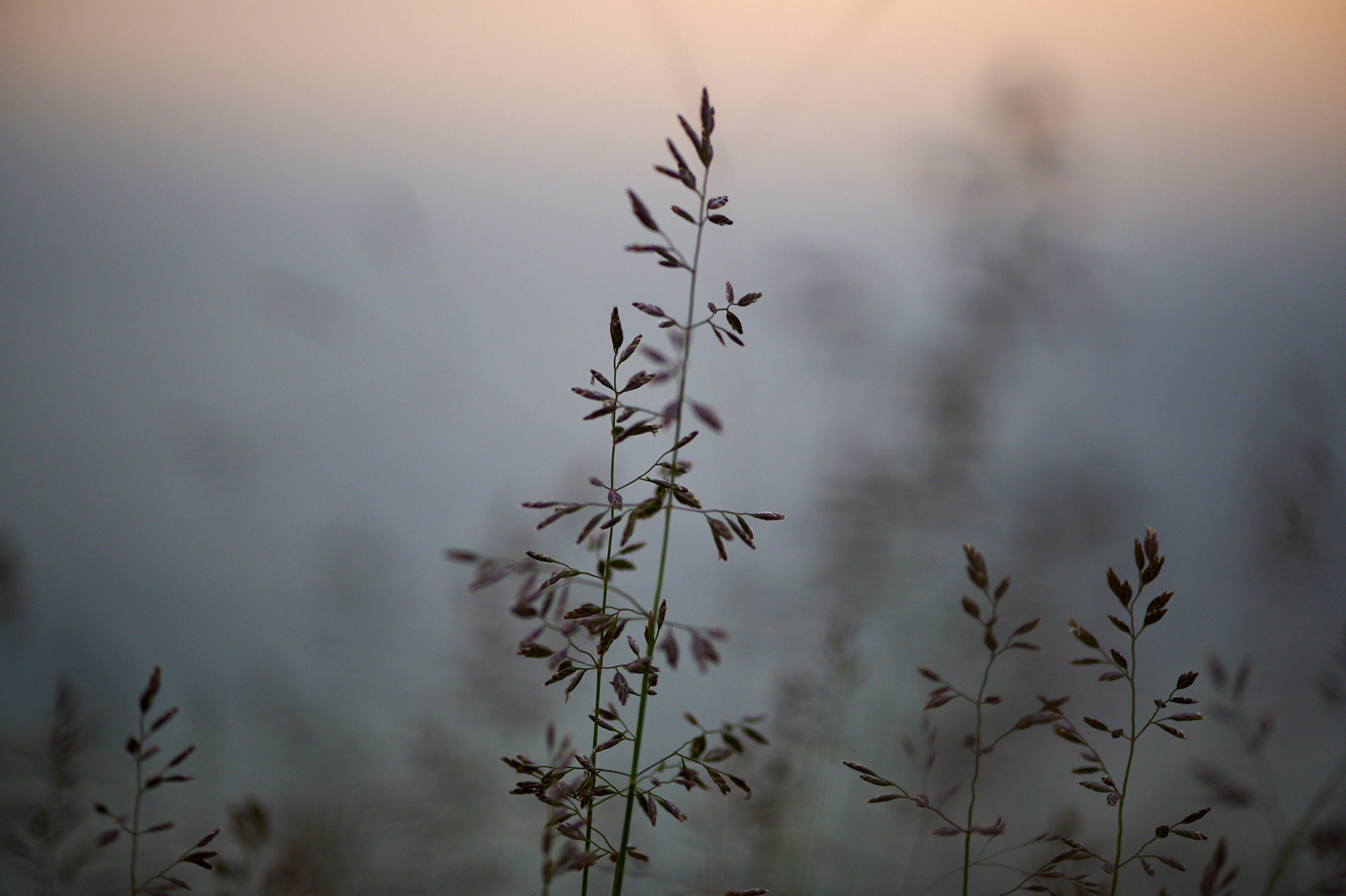 grasses north shore lake superior bokeh sunset