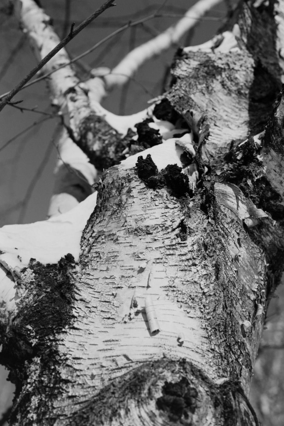 Lake Superior National Forrest winter black and white landscape detail