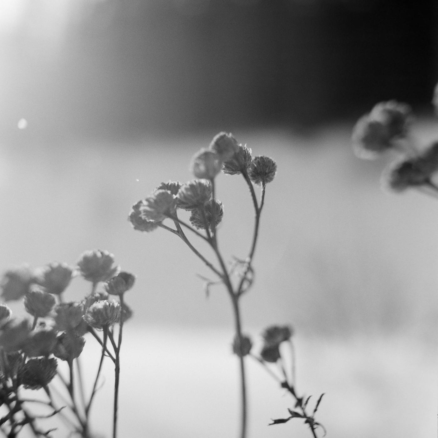 sunlight winter flower lake superior