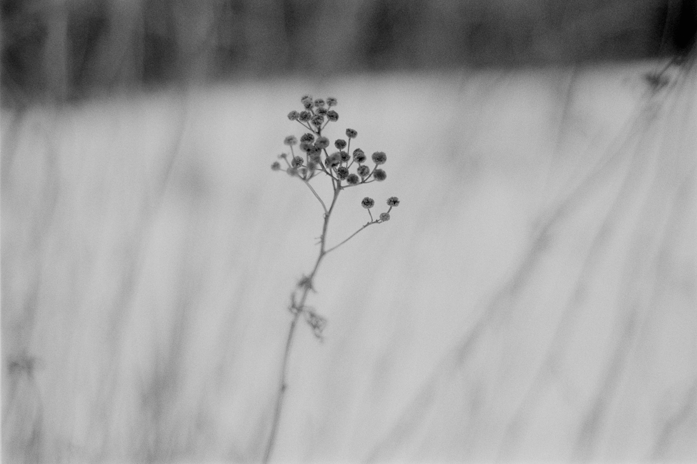 winter flower lake superior