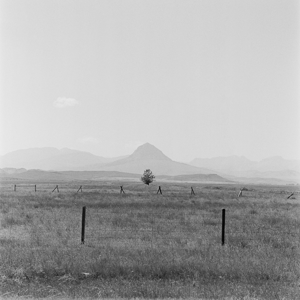 Northern Montana Tree Fence Mountain black and white Kodak TriX