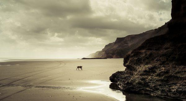 Coast - Sea